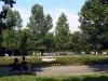 Borisova-garden-lily-lake